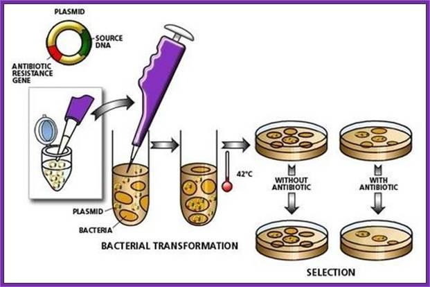 Molecular tools-III