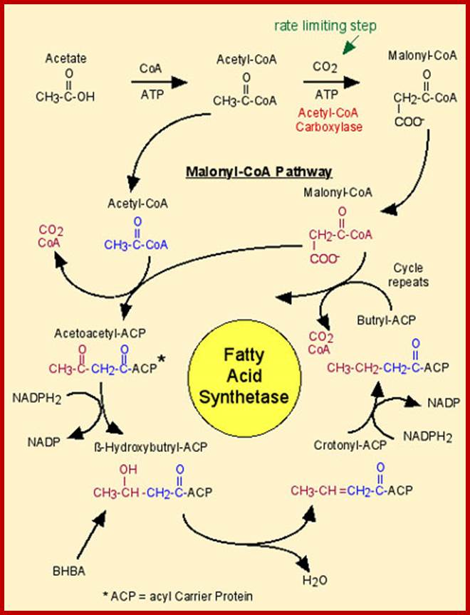 enzymes used to synthesise biopol 434 polylactic acid: synthesis, properties and applications, l avérous pla belongs to the family of aliphatic polyesters commonly made from -hydroxy acids, which also includes, for example, polyglycolic acid (pga.