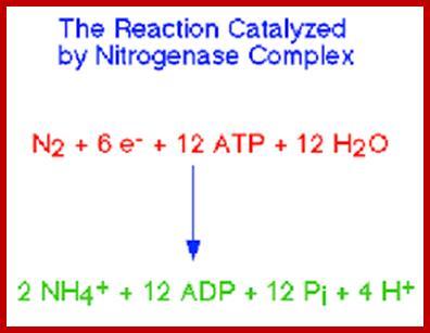 Ecological Aspects Of Nitrogen Metabolism In Plants