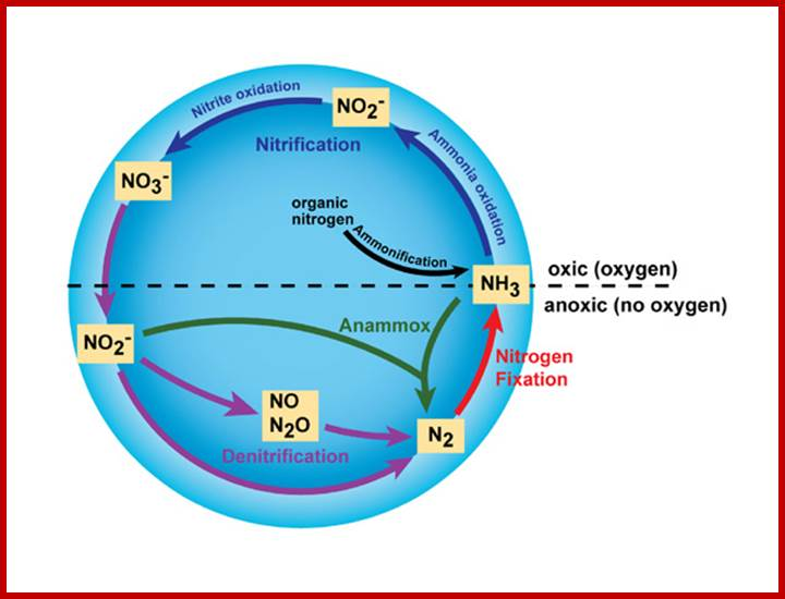 nitrogen and overall cell reaction On the cathode, n 2 is electrochemically reduced to ammonia in the presence of water (1) on the anode, hydroxide is electrochemically oxidized to oxygen gas (2) and the overall cell reaction is therefore (3) unlike the haber-bosch process, this reaction can be viewed as a competition for hydrogen between n 2 and o 2, leading to the formation of .