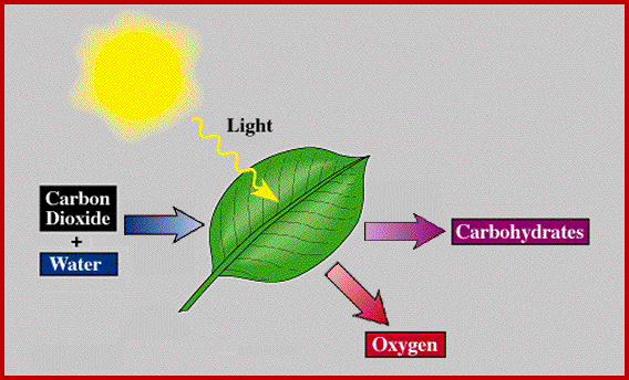 Plant energy transformations photosynthesis inputs and outputs of photosynthesis phschool ccuart Choice Image