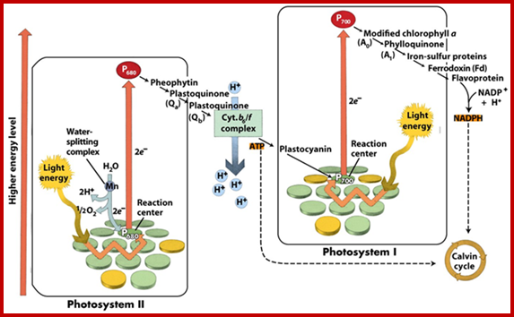 Plant Energy Transformations Photosynthesis