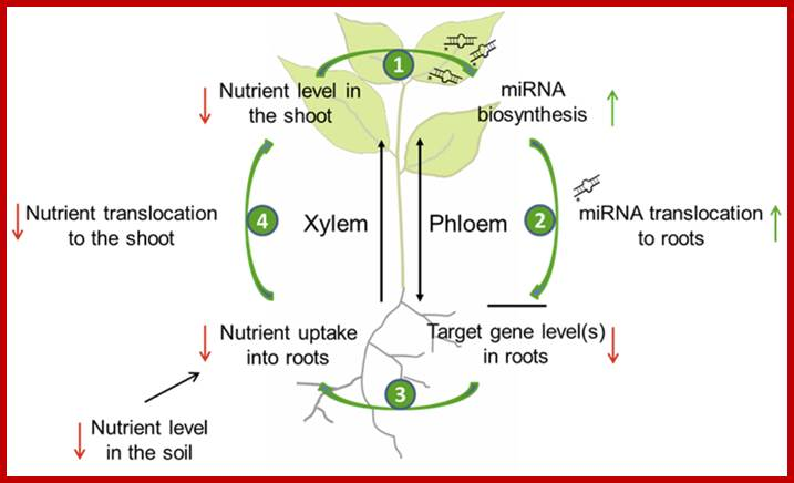a short description of how photosythesis processes in plants When it comes to photosynthesis, plants perform quantum  [–321 degrees  fahrenheit] and then pulsed it with extremely short bursts of laser light   employing this process allows the near-perfect efficiency of plants in.