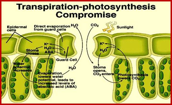 an analysis of photosynthesis factor in biology of the plants Start studying biology learn vocabulary,  which factor would not limit the production of glucose by photosynthesis in plants.