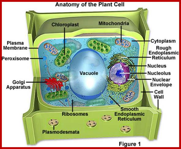 The nucleus ccuart