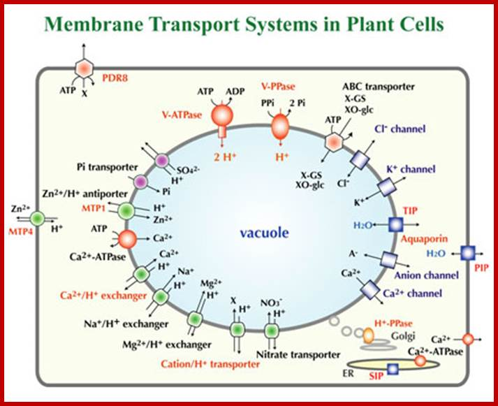 cell wall structure function