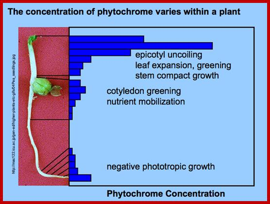 Diagram Of Seed Germination Http Plantphysinfo Plantphysiology