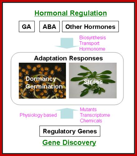 Physiology Of Dormancy
