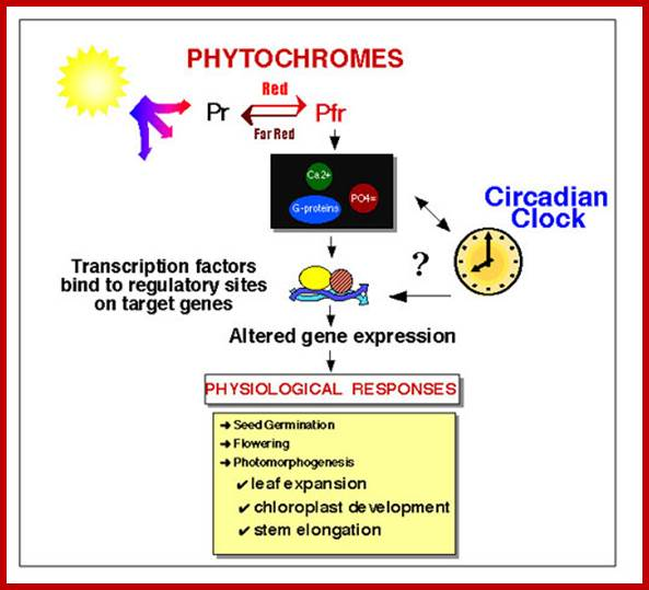 Image result for circadian rhythm in plants