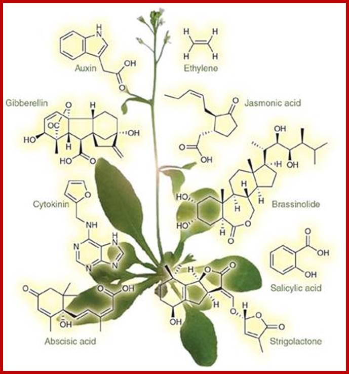 Exle synergistic effect hormones