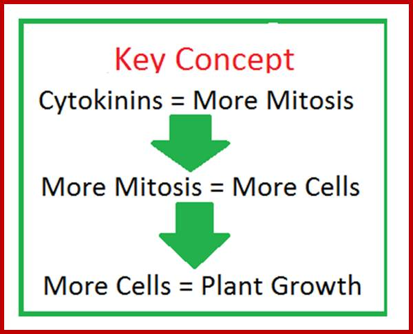 plant hormones Learn about bioidentical hormones from the cleveland clinic  additional risks  regarding the purity and safety of custom compounded bioidentical hormones.