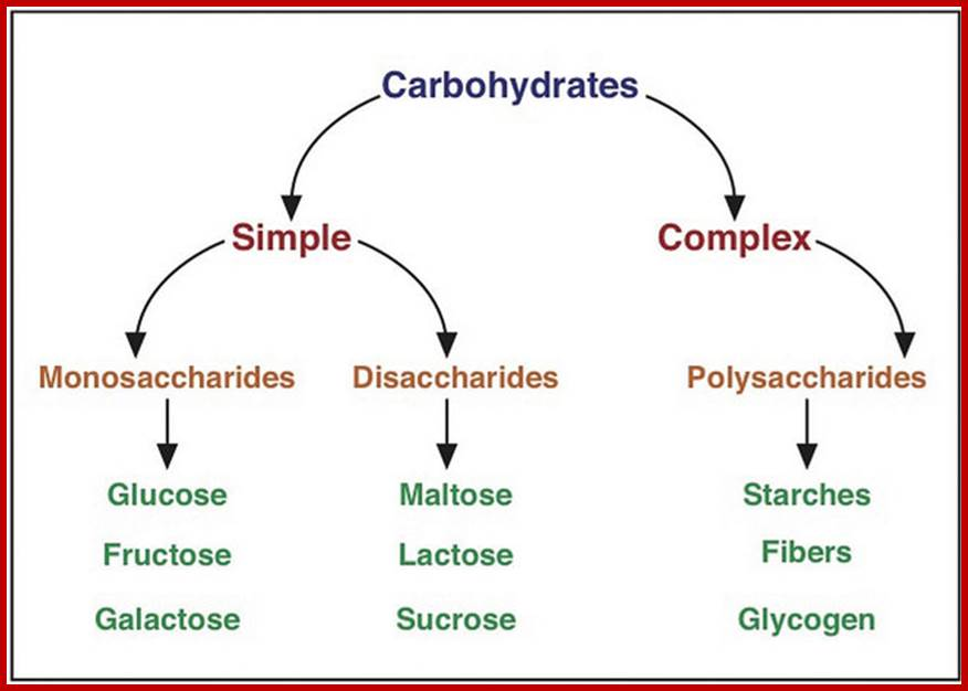 D Deoxyribose Carbohydrate Metabolis...
