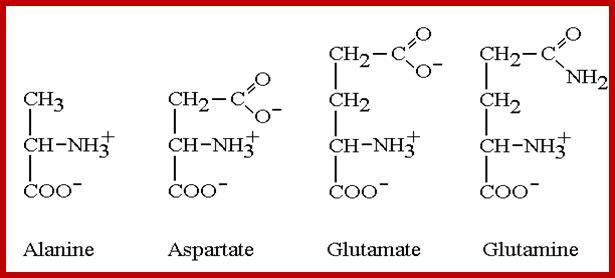 Nitrogen Metabolism
