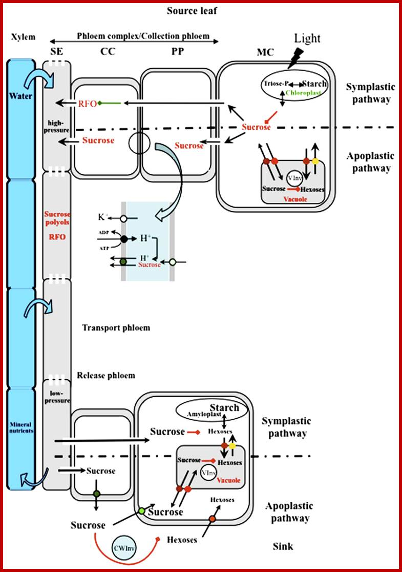 Animal Cell Diagram Labeled Driverlayer Search Engine